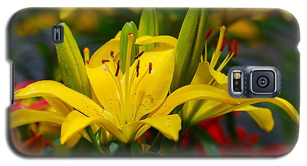 Galaxy S5 Case featuring the photograph Yellow Day Lily 20120614_55a by Tina Hopkins