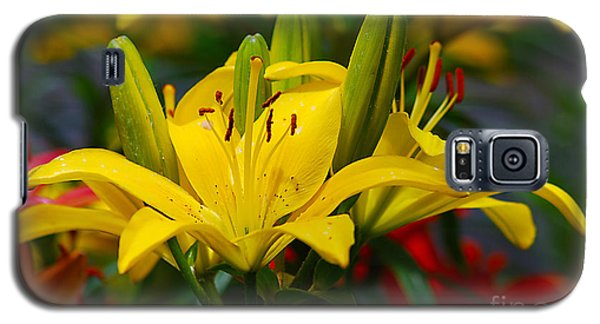 Yellow Day Lily 20120614_55a Galaxy S5 Case