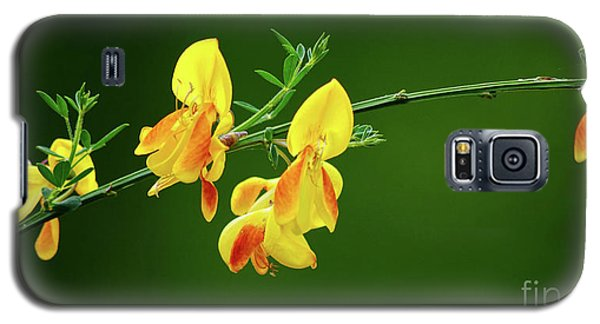 Yellow Fever Galaxy S5 Case