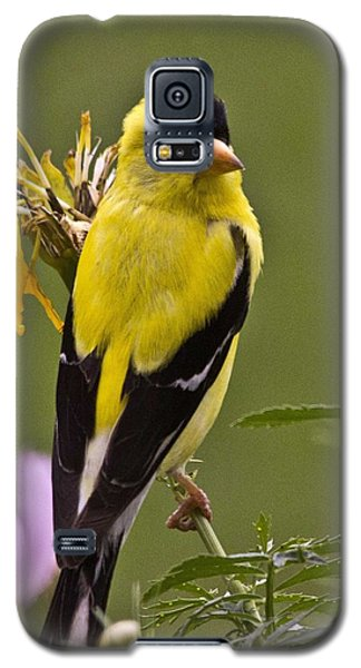 Yellow Finch - Color Impact - Artist Cris Hayes Galaxy S5 Case