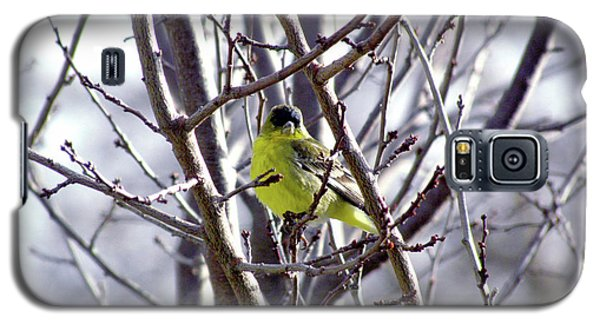 Galaxy S5 Case featuring the photograph Yellow Finch by Bonnie Muir