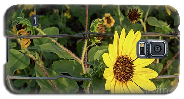 Yellow Flower Escaping From A Barb Wire Fence Galaxy S5 Case