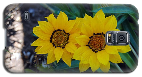 Gazania Rigens - Treasure Flower Galaxy S5 Case