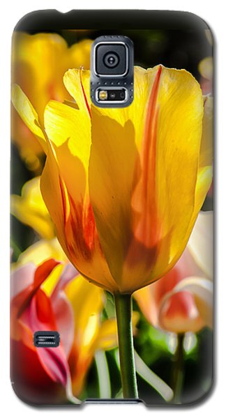 Yellow For You Galaxy S5 Case by Jim Moore