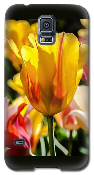 Galaxy S5 Case featuring the photograph Yellow For You by Jim Moore