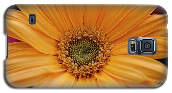 Galaxy S5 Case featuring the photograph Yellow Gerbera Daisy by Ivete Basso Photography