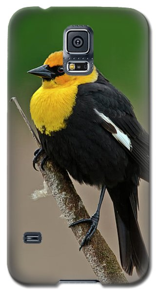 Yellow Headed Blackbird Galaxy S5 Case