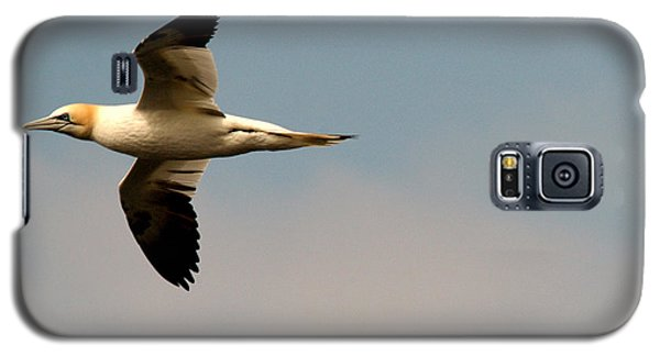 Yellow Headed Gull In Flight Galaxy S5 Case