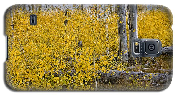 Yellow In Grand Teton Galaxy S5 Case