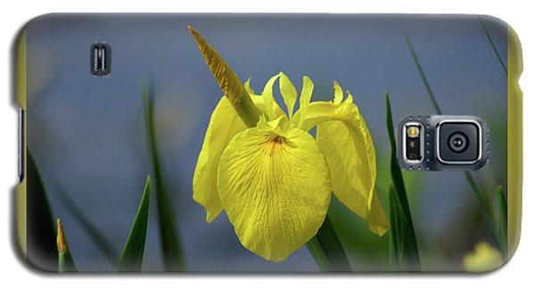 Yellow Iris Galaxy S5 Case by Jean Haynes