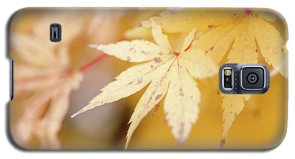 Yellow Leaf With Red Veins Galaxy S5 Case