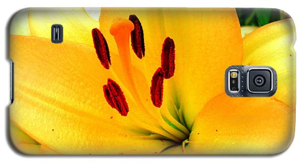 Galaxy S5 Case featuring the photograph Yellow Lilies 1 by Randall Weidner