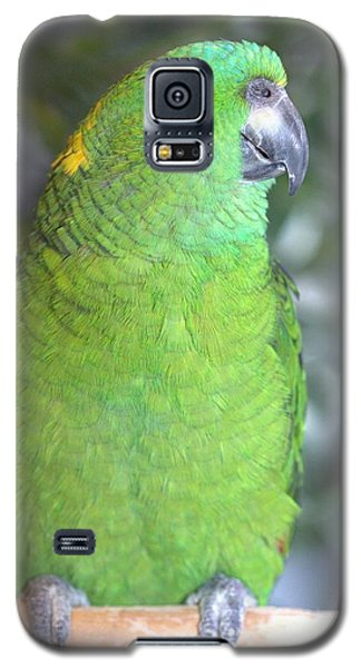 Galaxy S5 Case featuring the photograph Yellow-naped Amazon by Debbie Stahre
