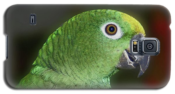 Yellow Naped Amazon Parrot Galaxy S5 Case by Smilin Eyes  Treasures