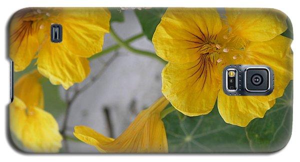 Yellow Nasturtium Galaxy S5 Case