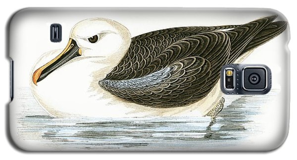 Yellow Nosed Albatross Galaxy S5 Case by English School