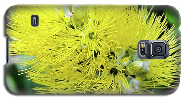 Yellow Ohia Flowers - Hawaii  Galaxy S5 Case