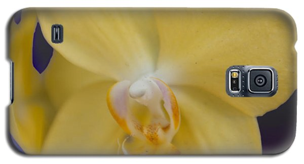 Galaxy S5 Case featuring the photograph Yellow Orchard by Linda Constant