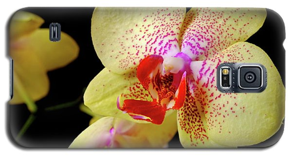Galaxy S5 Case featuring the photograph Yellow Phalaenopsis Orchid by Dariusz Gudowicz