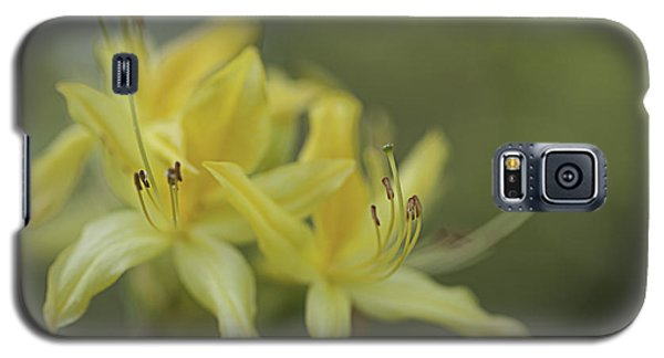 Galaxy S5 Case featuring the photograph Yellow Rhodo by Jacqui Boonstra