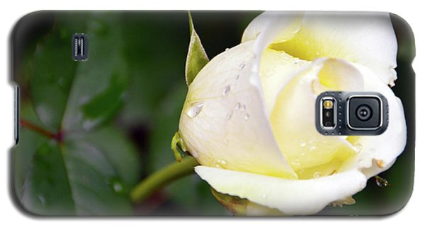 Yellow Rose 2 Galaxy S5 Case
