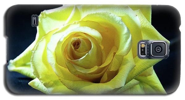 Yellow Rose-7 Galaxy S5 Case