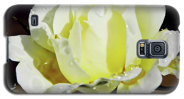 Yellow Rose Dew Drops Galaxy S5 Case