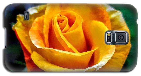 Yellow Rose Galaxy S5 Case by Garnett Jaeger