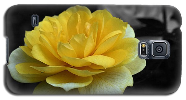 Yellow Rose In Bloom Galaxy S5 Case by Smilin Eyes  Treasures