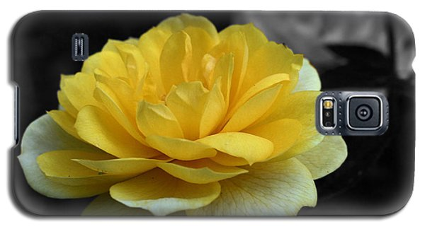 Yellow Rose In Bloom Galaxy S5 Case