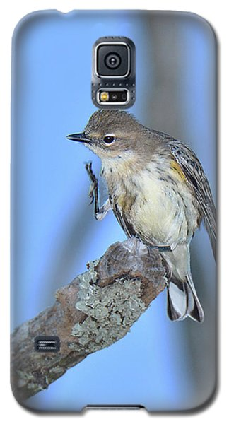 Yellow-rumped Warbler Itch Galaxy S5 Case by Alan Lenk