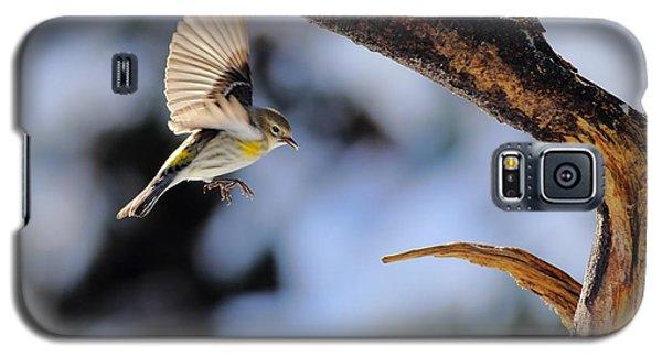 Yellow-rumped Warbler Landing Galaxy S5 Case