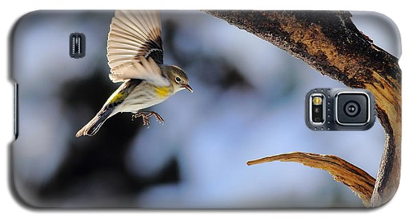 Yellow-rumped Warbler Landing Galaxy S5 Case