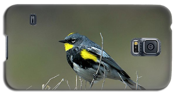 Galaxy S5 Case featuring the photograph Yellow-rumped Warbler by Mike Dawson