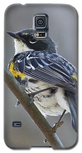 Yellow-rumped Warbler Portrait Galaxy S5 Case by Anita Oakley