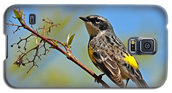 Yellow Rumped Warbler Galaxy S5 Case