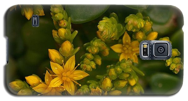 Yellow Sedum Galaxy S5 Case