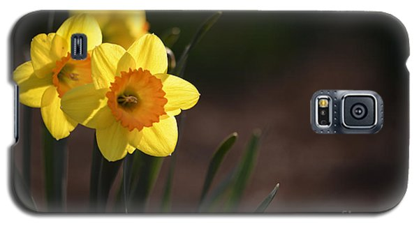Yellow Spring Daffodils Galaxy S5 Case by Andrea Silies