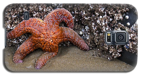 Orange Starfish On Beach #4 Galaxy S5 Case