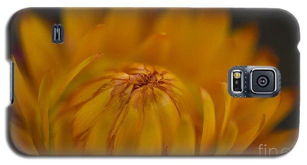 Yellow Strawflower Blossom Close-up Galaxy S5 Case