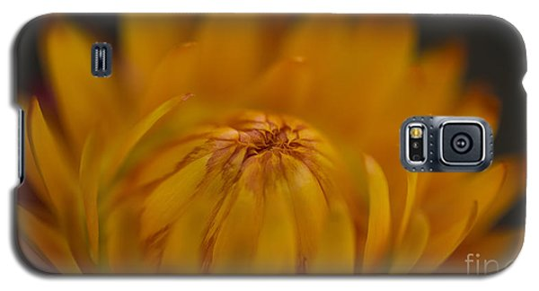 Yellow Strawflower Blossom Close-up Galaxy S5 Case