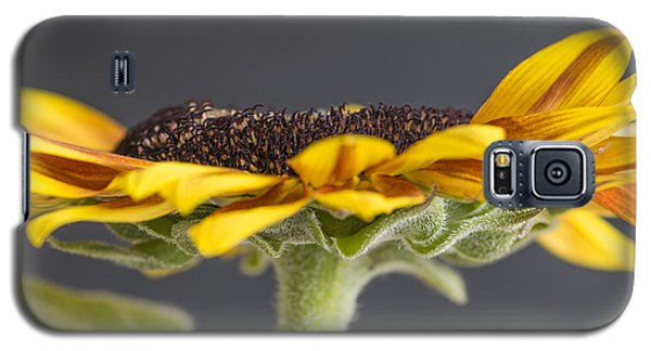 Yellow Sunflower Fine Art Wall Decor Galaxy S5 Case