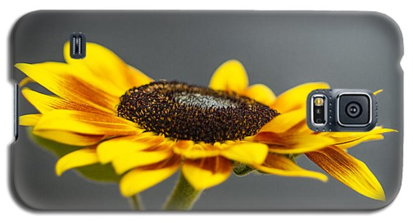 Yellow Sunflower Photograph Galaxy S5 Case
