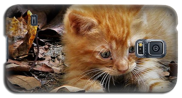 Yellow Tabby Kitten Galaxy S5 Case
