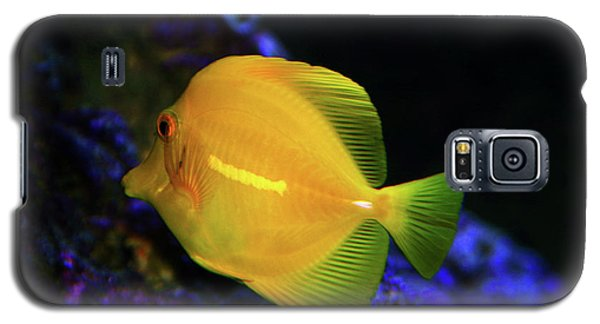 Galaxy S5 Case featuring the photograph Yellow Tang by Anthony Jones