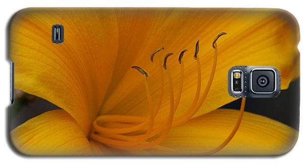 Yellow Tiger Lilly Galaxy S5 Case