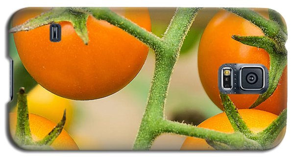 Galaxy S5 Case featuring the photograph Yellow Tomatoes by Paul Miller