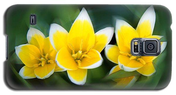Yellow Trio Galaxy S5 Case