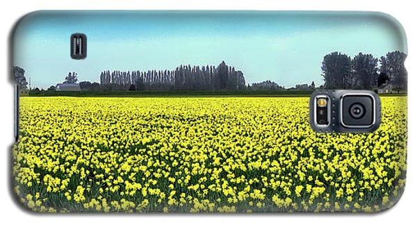 Yellow Tulip Fields Galaxy S5 Case by David Patterson