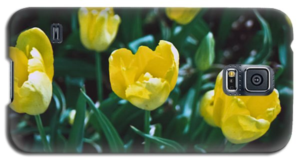 Galaxy S5 Case featuring the photograph Yellow Tulips--film Image by Matthew Bamberg